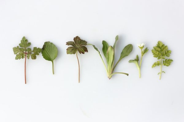 Natural Substances That Offer Wellness Advantages